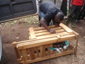 Carefully crated up for the trip to Entebbe (photo T. Kidega)